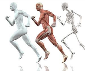 Um pouco de história da ciência brasileira em relação a composição corporal